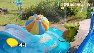 도그뉴스갤러리에 수영장 설치했네요~ 행복한 하루!!