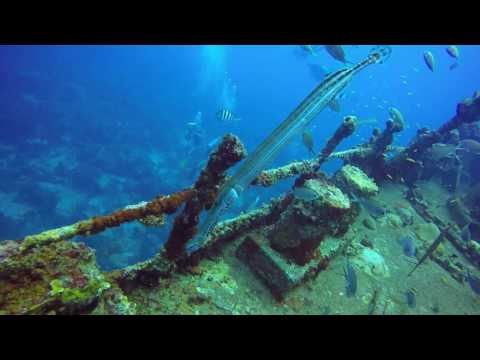 Jane Sea Wreck,Diving Aruba