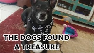 BARKBOX TREASURE CHEST
