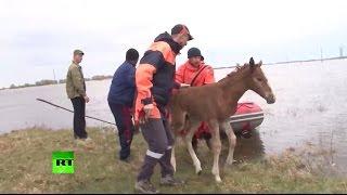Сотрудники МЧС работают в пострадавших от паводков районах Тюменской области