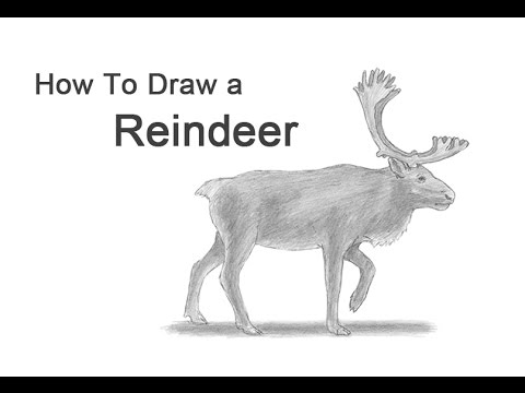 how to draw a reindeer caribou youtube
