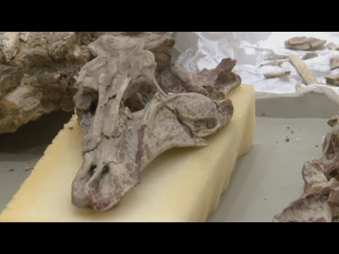 Smuggled dinosaur fossils found by US authorities