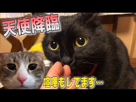 再会したばかりの猫たちが喧嘩勃発?!ギスギスしたところに救世主が…!