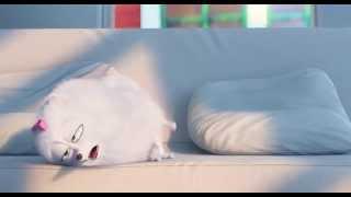 Мультфильм Тайная жизнь домашних животных (Дублированный трейлер #1 HD 2015)