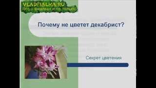 Почему не цветет декабрист ?(, 2014-10-04T14:33:21.000Z)
