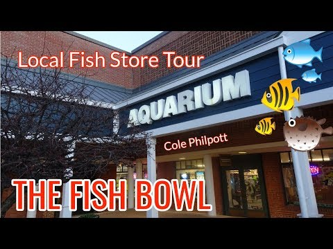 The Fish Bowl: BEST FISH STORE EVER!