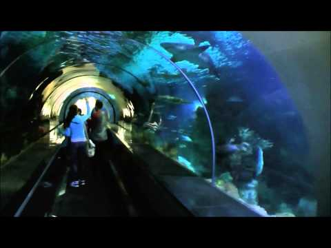 Shark Encounter, SeaWorld San Diego