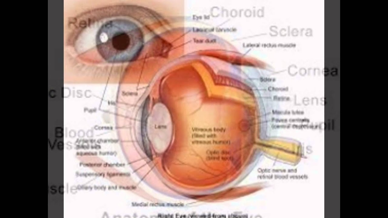 Human Eye Anatomy Youtube