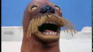 YouTube Poop: Pingu and the retarted Walrus
