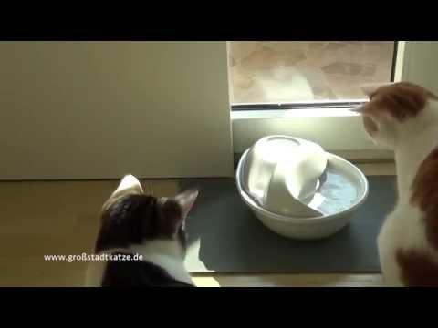 Trinkbrunnen für Katzen von PIONEER PET