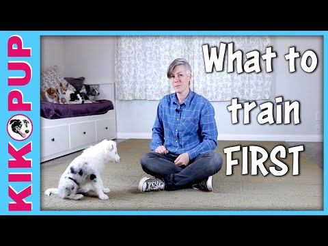 What to Train Your Puppy First