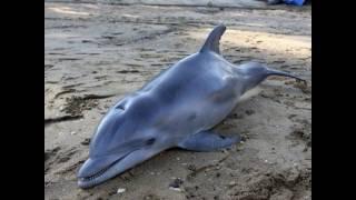 Dj Slon & Ангел А - Дельфины