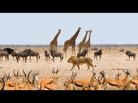 Mundo Selvagem - Namíbia - África - Documentário Animal