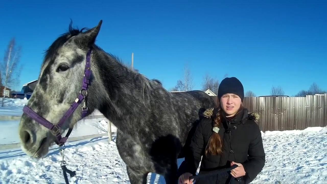 Объявления о продаже жеребцов, кобыл и жеребят раздела лошади в казани на avito. Лошадь, жеребец орловский рысак. 80 000. Цена не указана.
