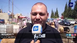 تراجع حاد في أسعار الأضاحي ثالث أيام العيد في مادبا - (23-8-2018)