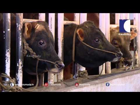 Cow Breeding Station in Mattupetti    Haritham Sundaram   Kaumudy TV