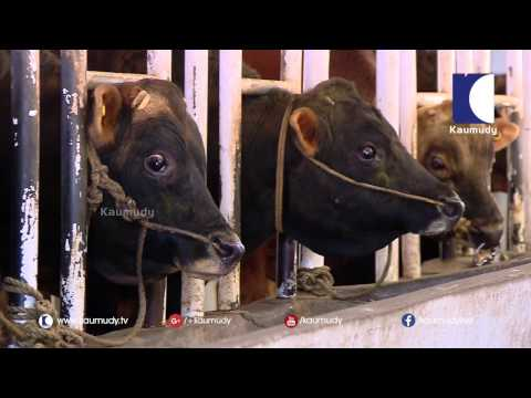 Cow Breeding Station in Mattupetti |  Haritham Sundaram | Kaumudy TV