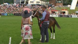 Merl Cym Cob Penc Ifanc | Welsh Ponies Cob Young Championship