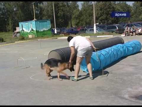 На фото Выставка бездомных животных состоится 20 мая изображение