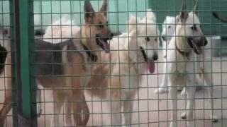 Городской приют для собак