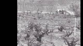 A Brief History of San Diego Wine