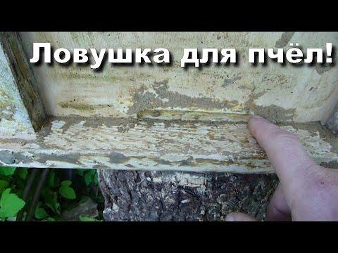 Поимка пчелиных роев с помощью Унирой