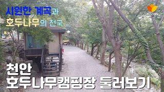 천안 호두나무캠핑장 둘러보기/계곡/호두나무/CAMPIN…