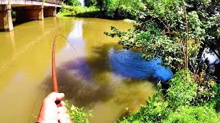 Creek Fishing For Catfish With Worms
