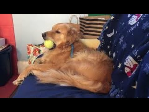 Dog Struggles To Keep Eyes Open, But Still Holds On To Favorite Ball