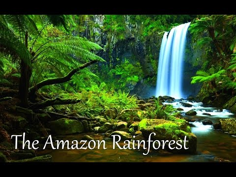 The Amazon Rainforest Facts (HD)