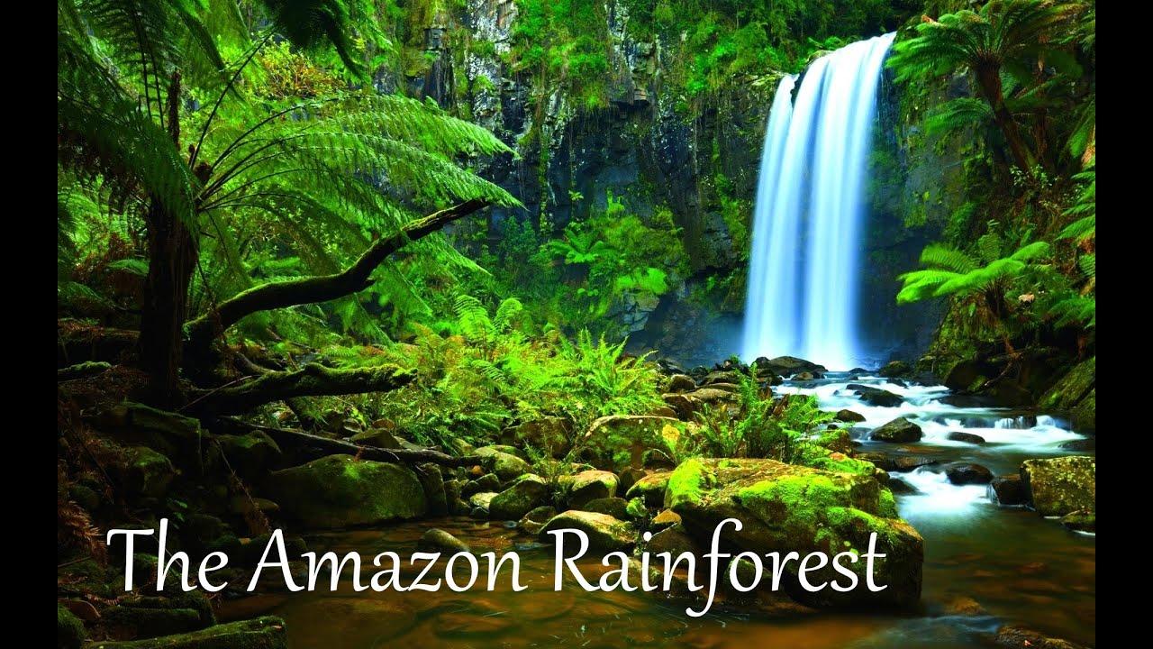 How Big Is The Amazon Rainforest