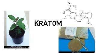 Alles über Kratom