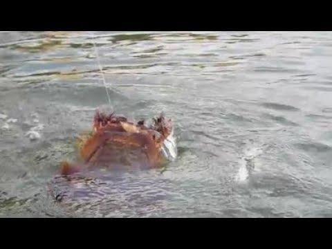 Fishing Goodland Bridge  - Strange Catch - Police Pulls Me Over