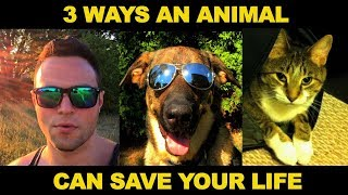 3 amazing life hacks how animals can save improve your life