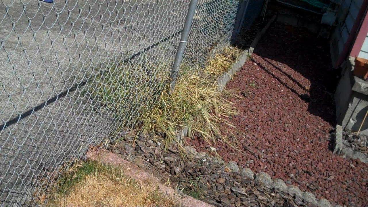 RoundUp Alternative Results Worry Free Vs 20 Vinegar Weed Killers