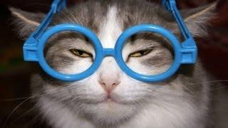 Smartest Cats (Умные Коты) 2015