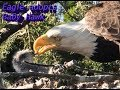 Hawk in Eagle's nest  - Where to find the best Information