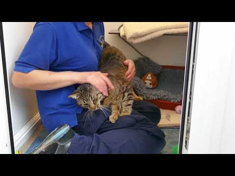 Jose At Cats Protection Eastbourne April 18