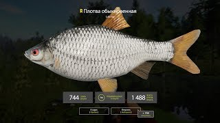 ★ Live Stream ★ Russian Fishing 4 ★