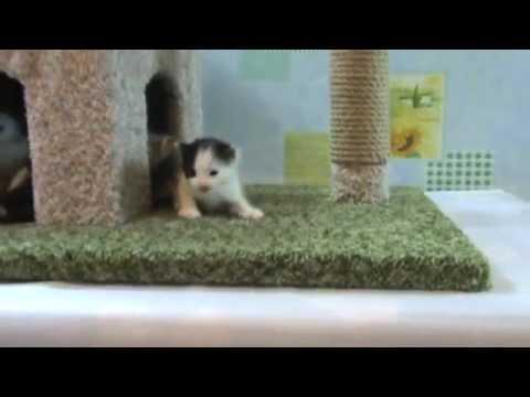 Дом с когтеточкой для котят . Сделай сам .