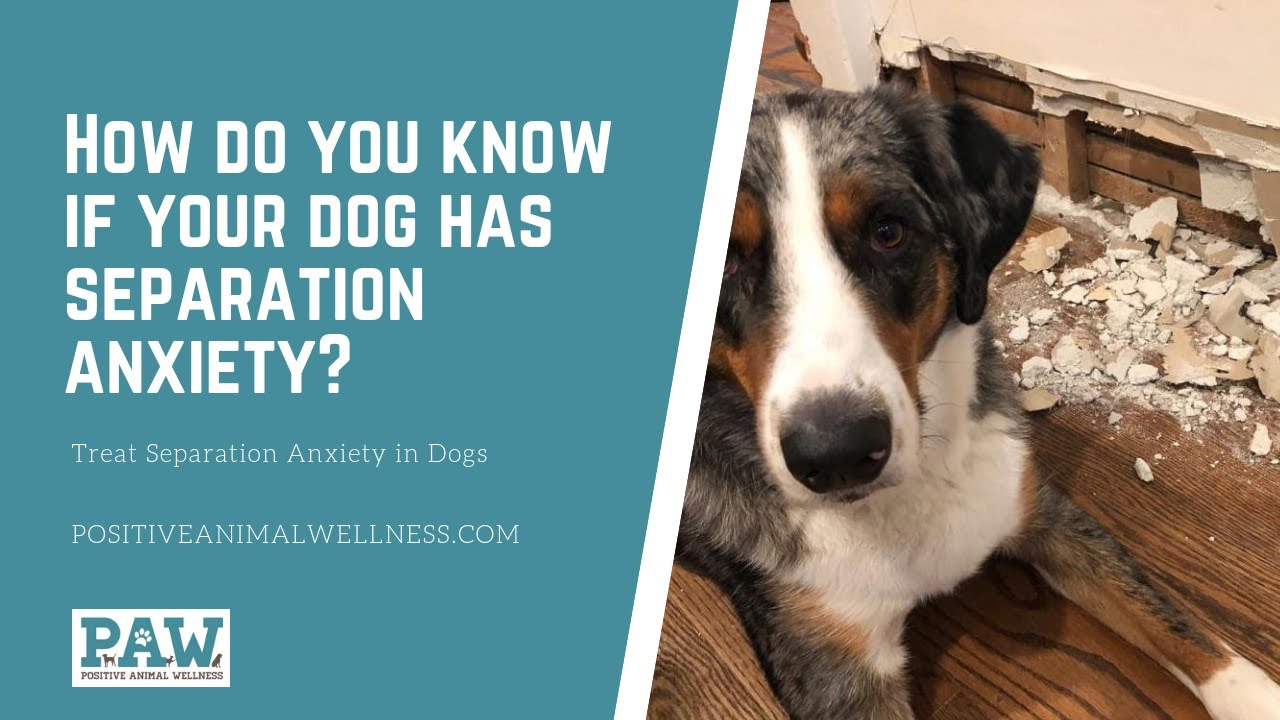 How Do You Know If Your Dog Has Separation Anxiety