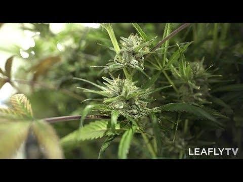 Growers Episode 1 - Matrix NV