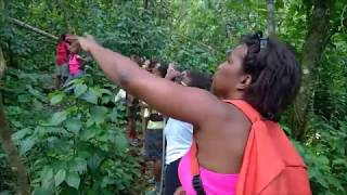 MARTINIQUE 2018  AJOUPA  CASCADES DE DANY  NEW