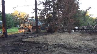 Cat 983 knocks down a tree 1