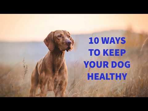 Ten Ways To Keep Your Dog Healthy