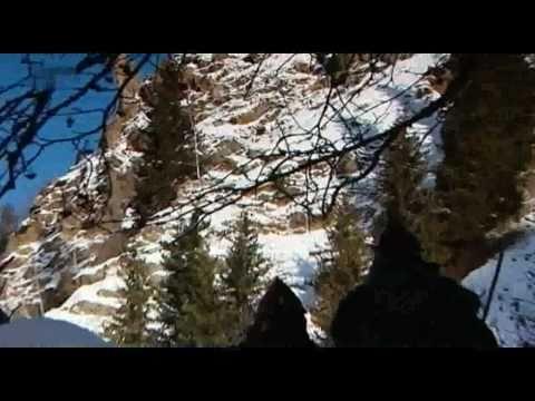 Der Steinbock in den Tiroler Alpen 2/2