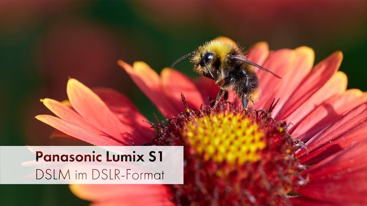 Download Panasonic Lumix S1 | Frischer Wind im Vollformat-Segment [Deutsch]