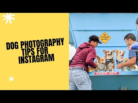 HOW TO TAKE PHOTOS OF YOUR DOG FOR INSTAGRAM (TIPS & TRICKS)