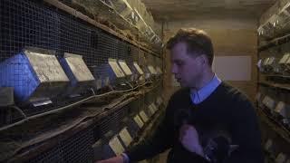 визит на шиншилловую ферму в Латвии. Система разведения, особенности