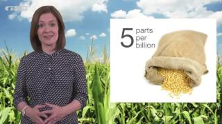 Mycotoxin reduction in cereal grains